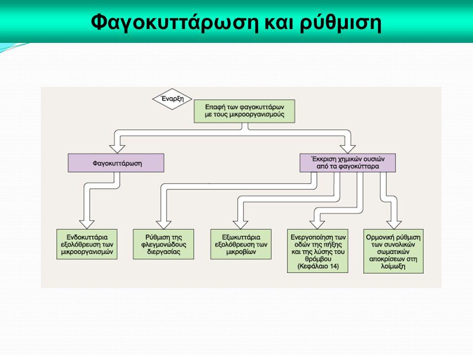 Φαγοκυττάρωση και ρύθμιση