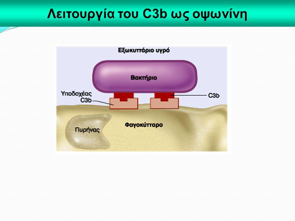 Λειτουργία του C3b ως οψωνίνη