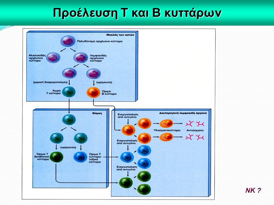 Προέλευση Τ και Β κυττάρων