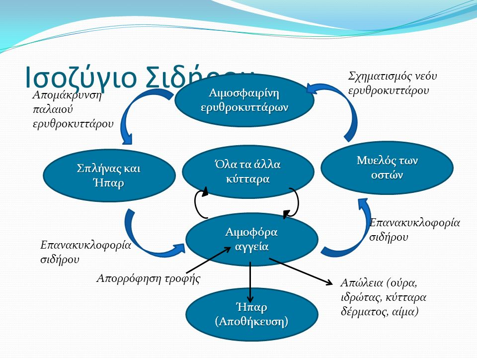 Αιμοσφαιρίνη ερυθροκυττάρων