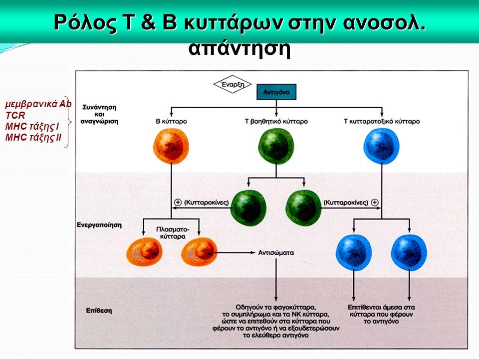 Ρόλος Τ & Β κυττάρων στην ανοσολ. απάντηση