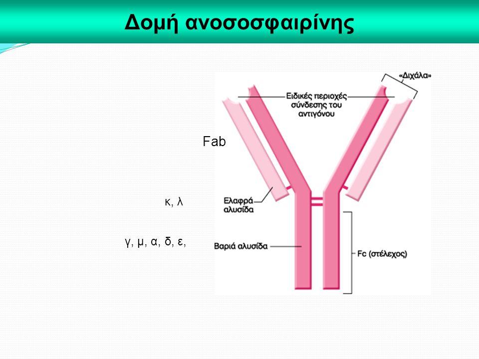 Δομή ανοσοσφαιρίνης Fab κ, λ γ, μ, α, δ, ε,