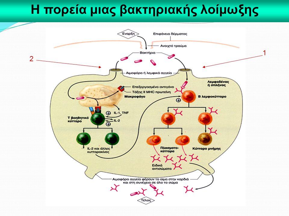 Η πορεία μιας βακτηριακής λοίμωξης
