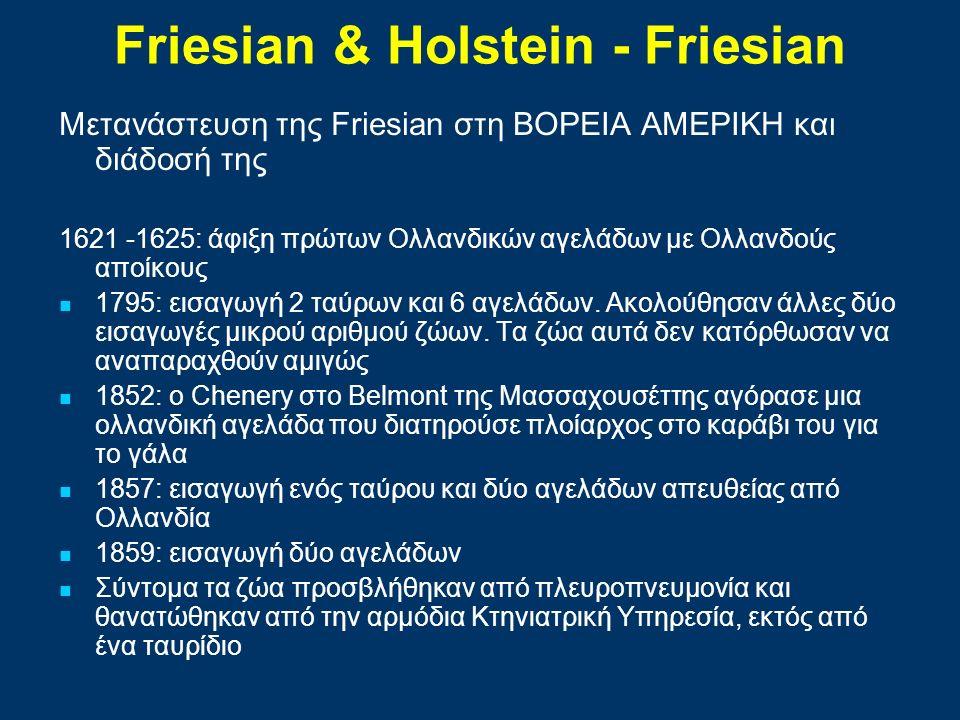 Friesian & Ηolstein - Friesian