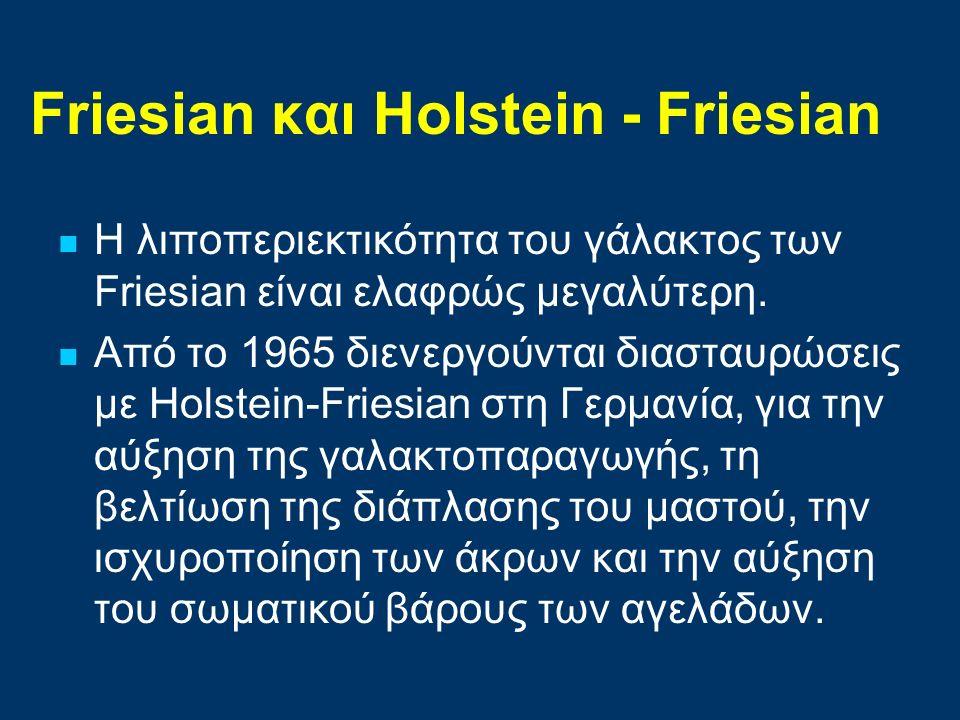 Friesian και Ηolstein - Friesian
