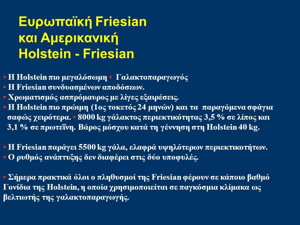 Ευρωπαϊκή Friesian και Αμερικανική Holstein - Friesian