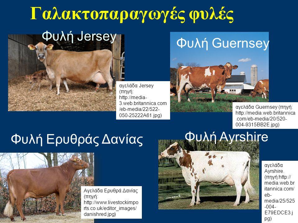 Γαλακτοπαραγωγές φυλές