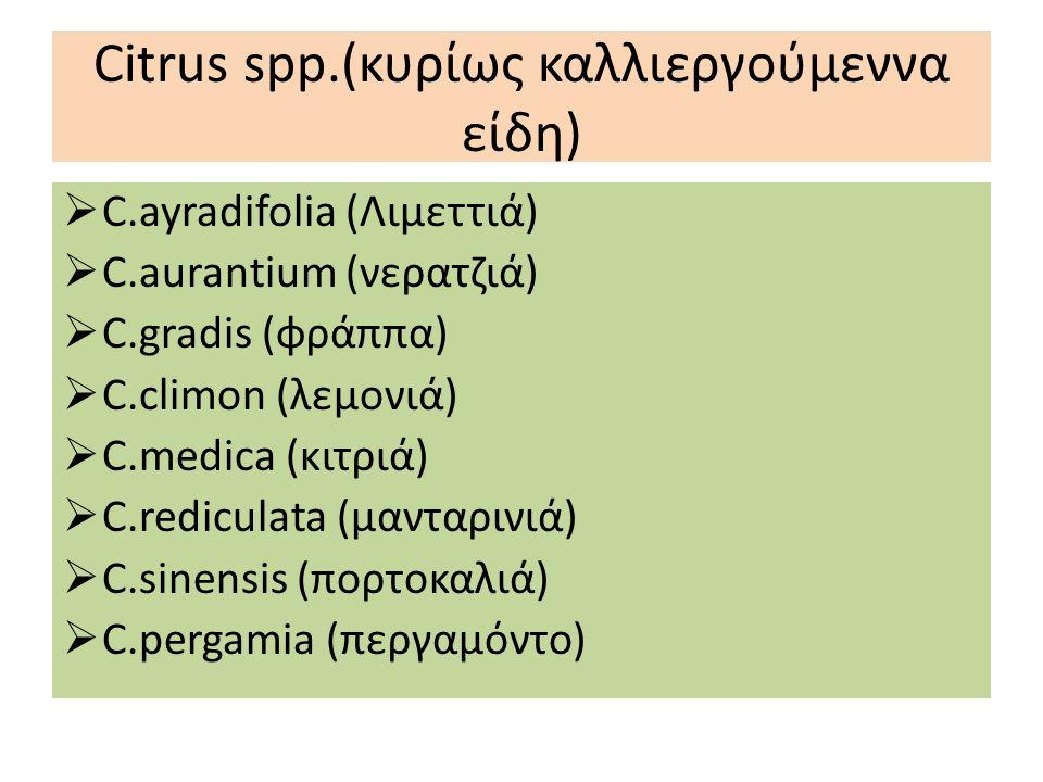 Citrus spp.(κυρίως καλλιεργούμεννα είδη)