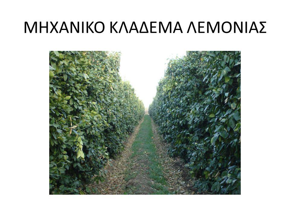 ΜΗΧΑΝΙΚΟ ΚΛΑΔΕΜΑ ΛΕΜΟΝΙΑΣ
