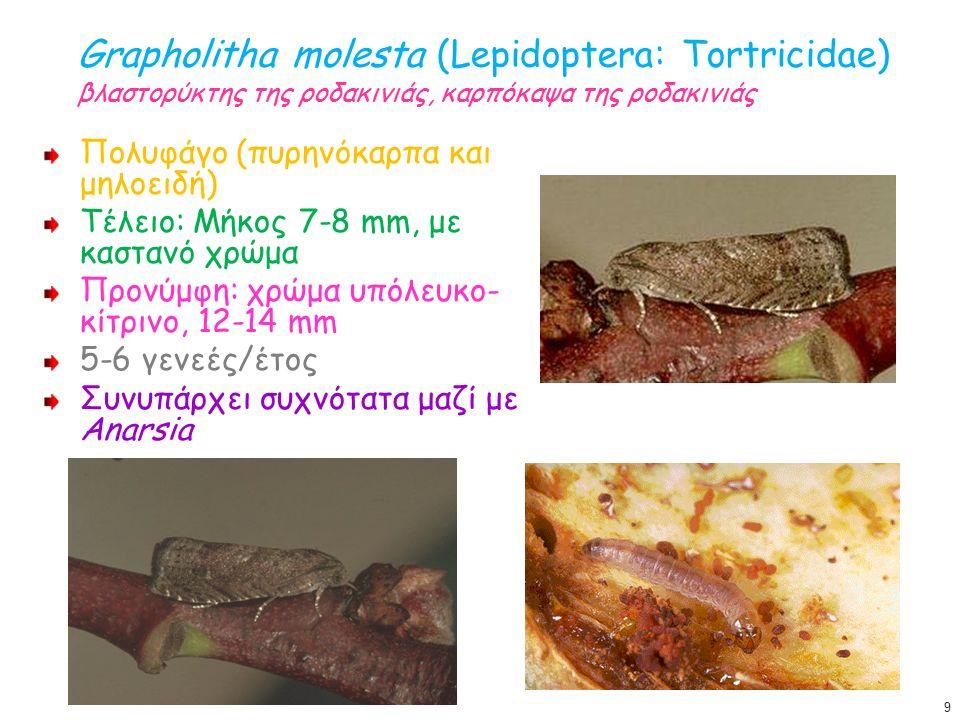 Grapholitha molesta (Lepidoptera: Tortricidae) βλαστορύκτης της ροδακινιάς, καρπόκαψα της ροδακινιάς