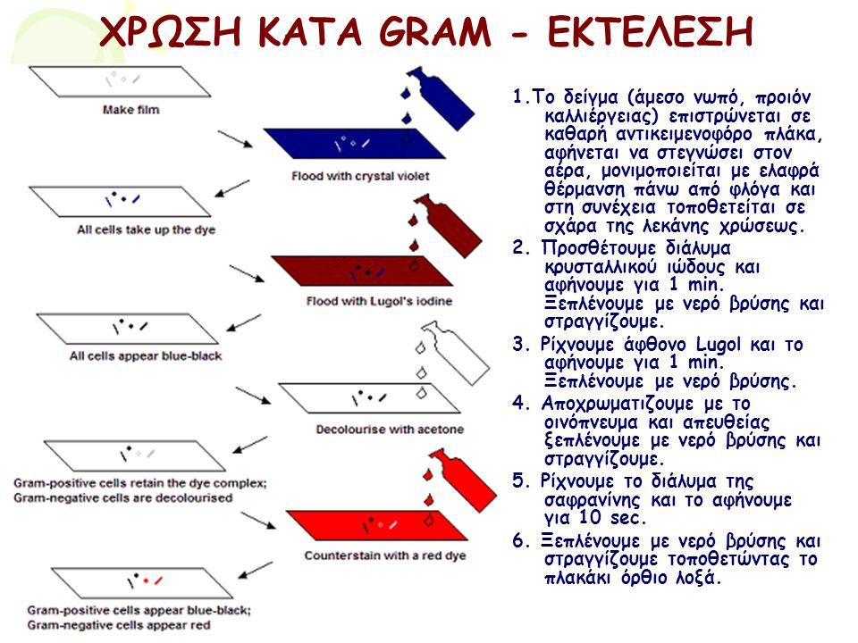 ΧΡΩΣΗ ΚΑΤΑ GRAM - ΕΚΤΕΛΕΣΗ