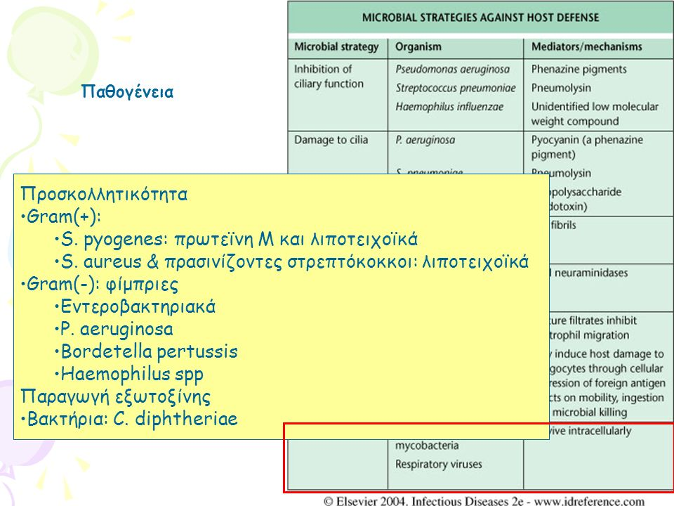S. pyogenes: πρωτεϊνη Μ και λιποτειχοϊκά