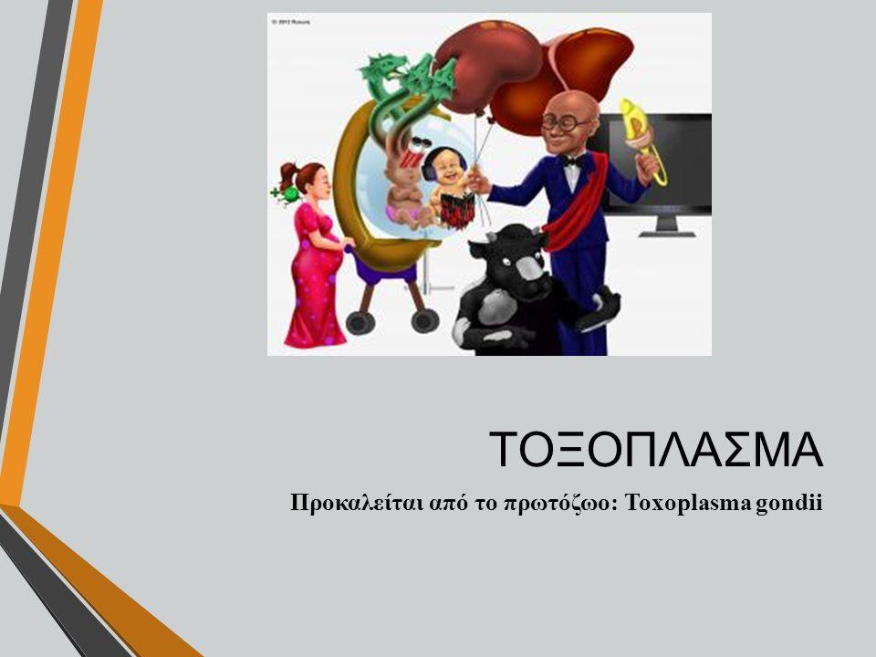 ΤΟΞΟΠΛΑΣΜΑ Προκαλείται από το πρωτόζωο: Toxoplasma gondii