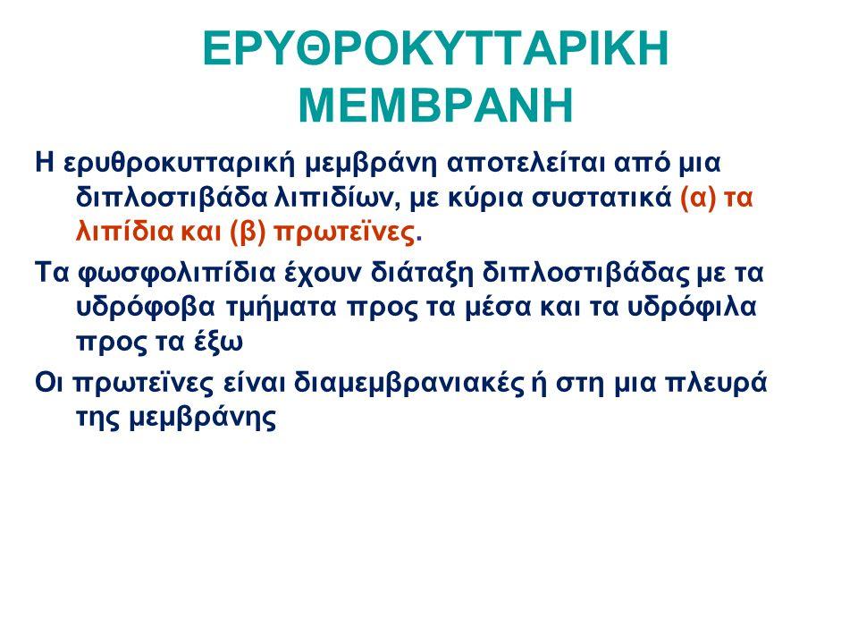 ΕΡΥΘΡΟΚΥΤΤΑΡΙΚΗ ΜΕΜΒΡΑΝΗ