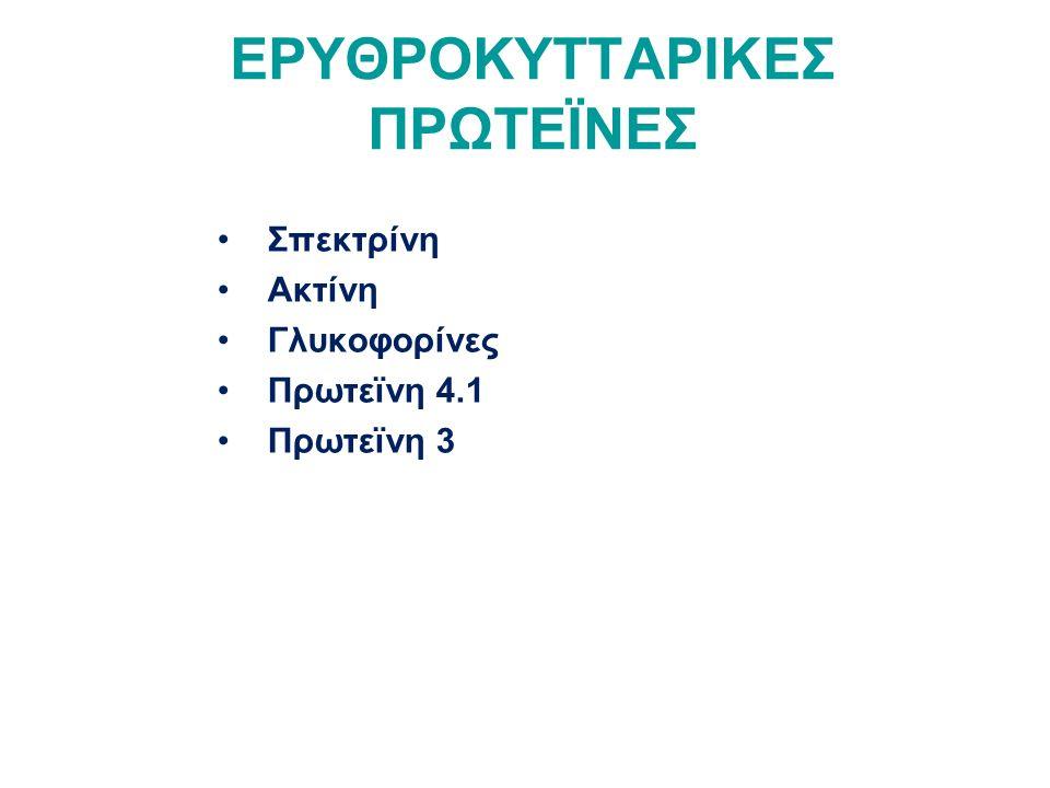 ΕΡΥΘΡΟΚΥΤΤΑΡΙΚΕΣ ΠΡΩΤΕΪΝΕΣ