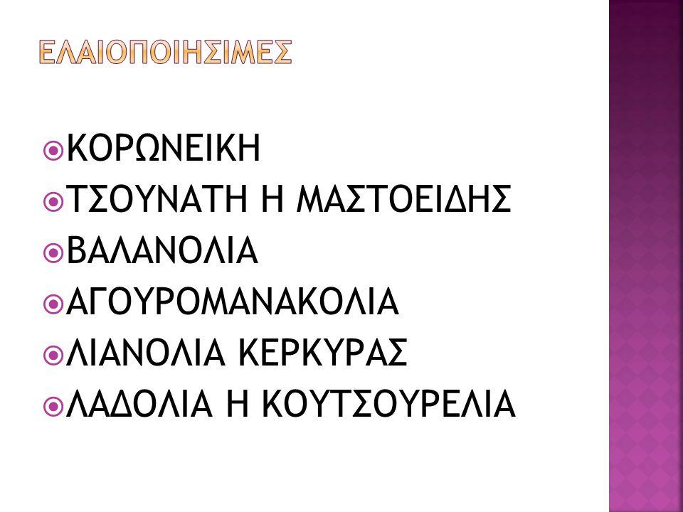 ΛΑΔΟΛΙΑ Η ΚΟΥΤΣΟΥΡΕΛΙΑ