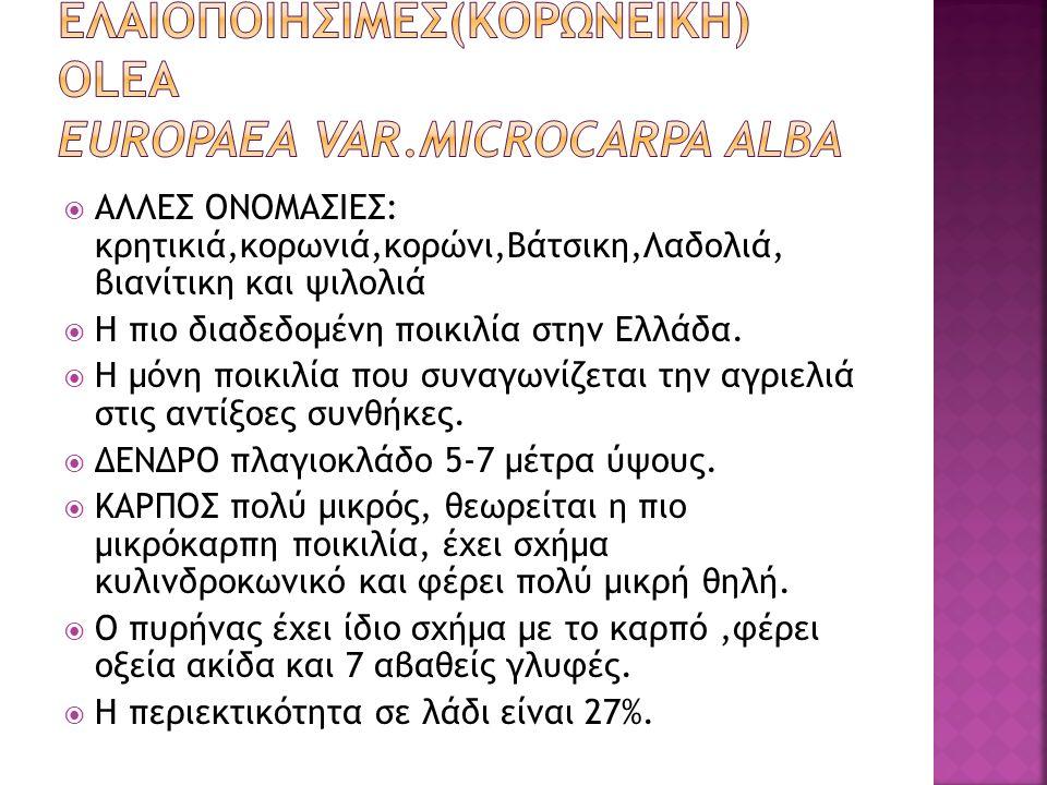 ΕΛΑΙΟΠΟΙΗΣΙΜΕΣ(ΚΟΡΩΝΕΪΚΗ) OLEA europaea VAR.MICROCARPA ALBA