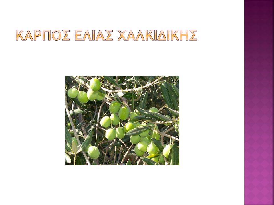 Καρποσ ελιασ Χαλκιδικησ