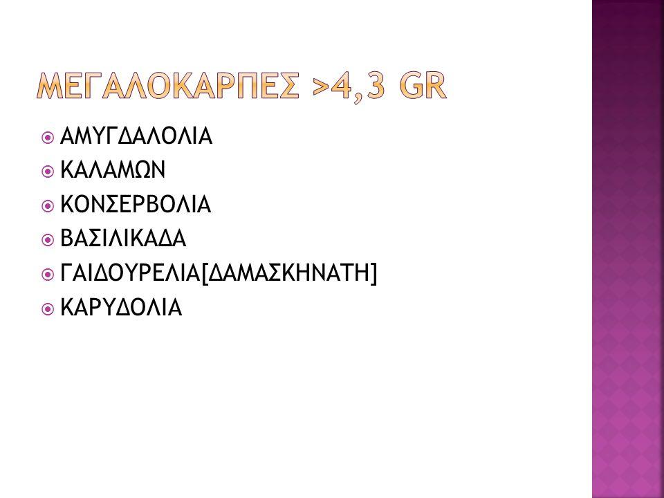 ΜΕΓΑΛΟΚΑΡΠΕΣ >4,3 Gr ΑΜΥΓΔΑΛΟΛΙΑ ΚΑΛΑΜΩΝ ΚΟΝΣΕΡΒΟΛΙΑ ΒΑΣΙΛΙΚΑΔΑ