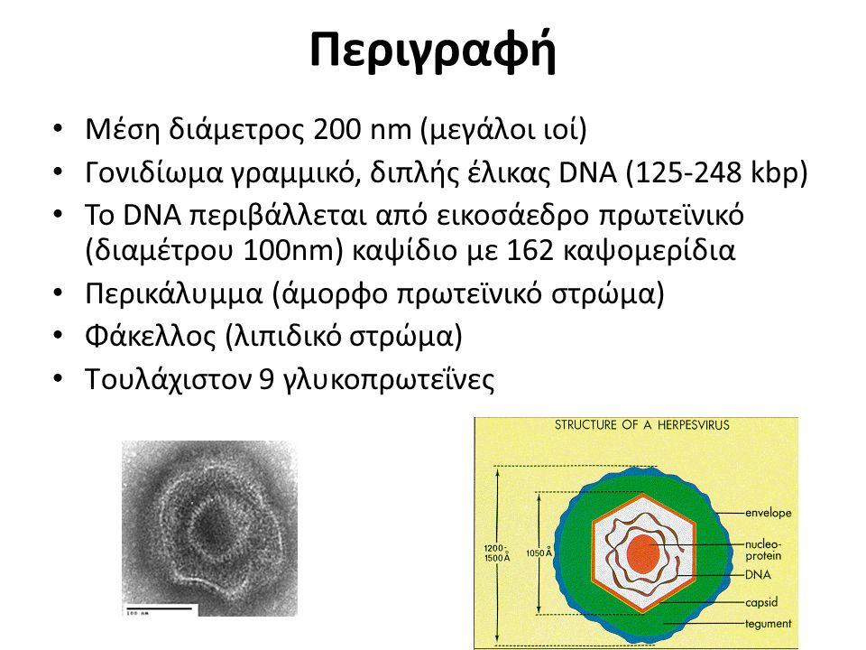 Περιγραφή Μέση διάμετρος 200 nm (μεγάλοι ιοί)