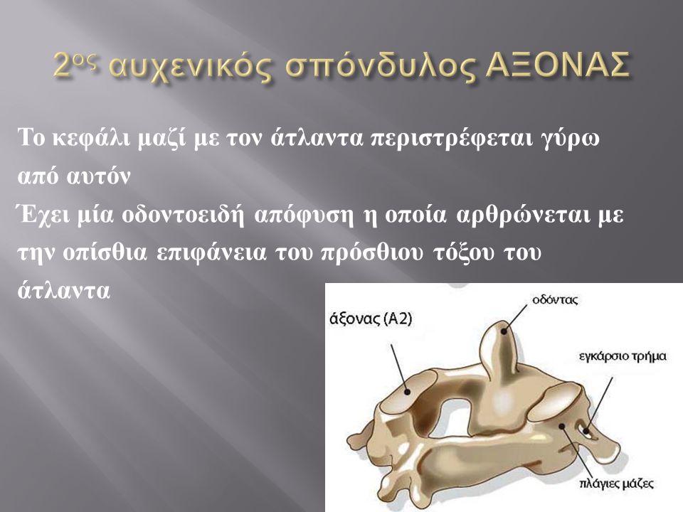 2ος αυχενικός σπόνδυλος ΑΞΟΝΑΣ
