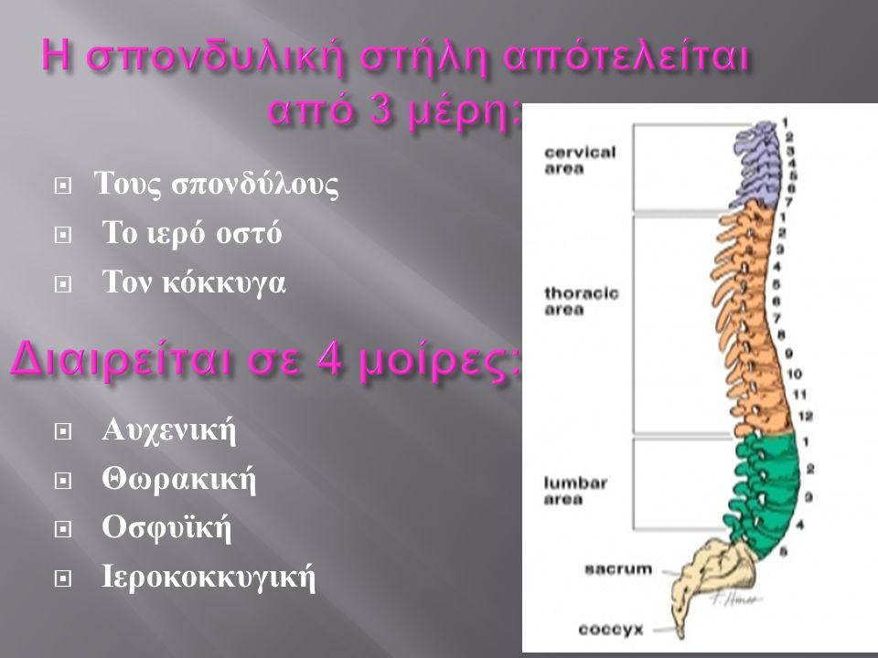 Η σπονδυλική στήλη απότελείται από 3 μέρη: