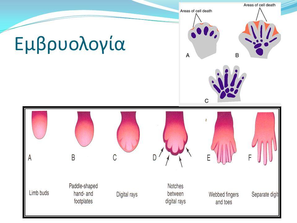 Εμβρυολογία