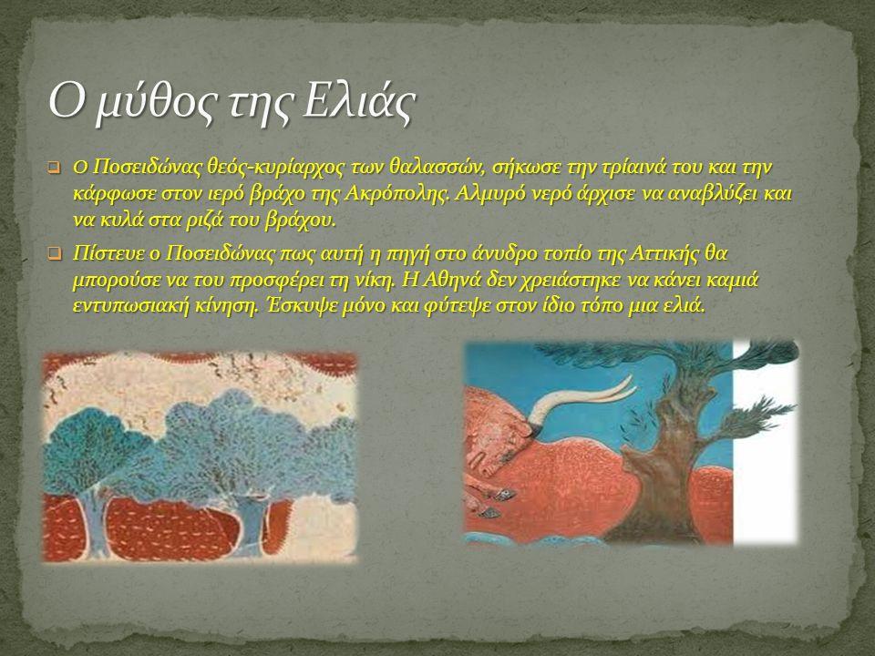 Ο μύθος της Ελιάς