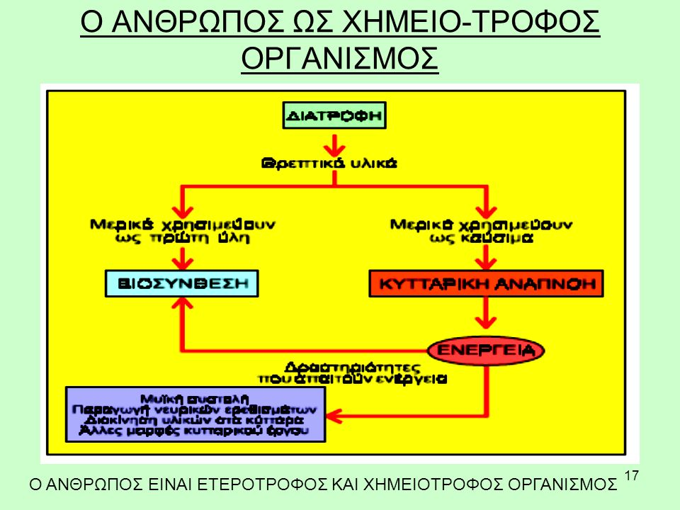 O ΑΝΘΡΩΠΟΣ ΩΣ ΧΗΜΕΙΟ-ΤΡΟΦΟΣ ΟΡΓΑΝΙΣΜΟΣ