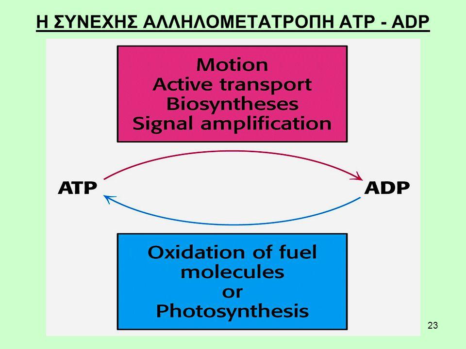 Η ΣΥΝΕΧΗΣ ΑΛΛΗΛΟΜΕΤΑΤΡΟΠΗ ATP - ADP