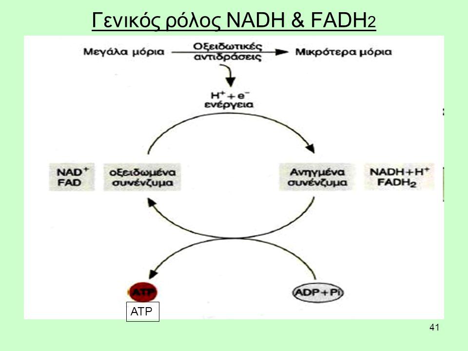Γενικός ρόλος NADH & FADH2