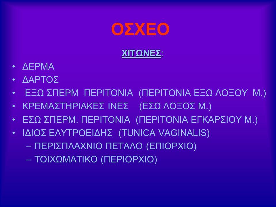ΟΣΧΕΟ ΧΙΤΩΝΕΣ: ΔΕΡΜΑ ΔΑΡΤΟΣ