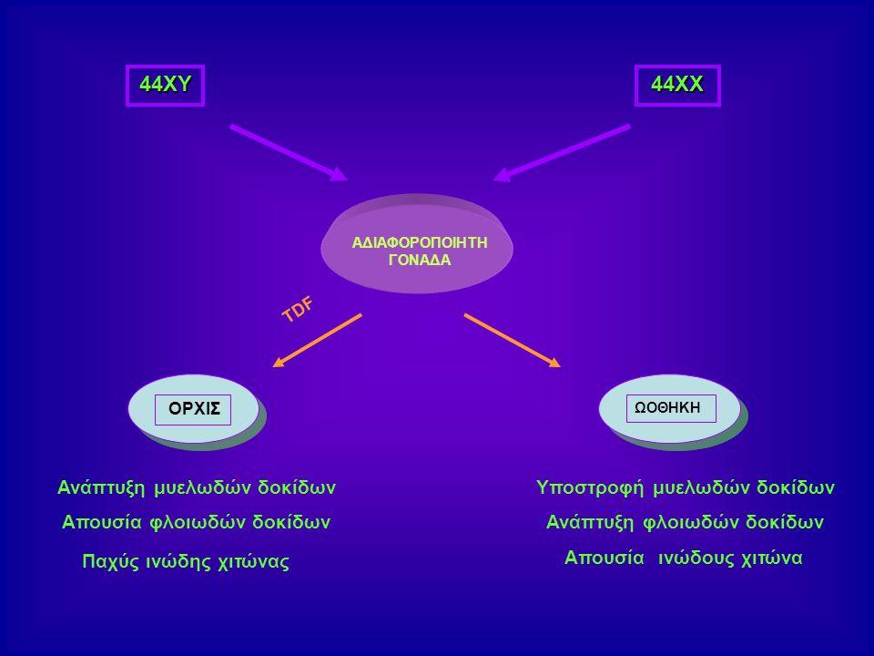 44ΧΥ 44ΧΧ Ανάπτυξη μυελωδών δοκίδων Απουσία φλοιωδών δοκίδων