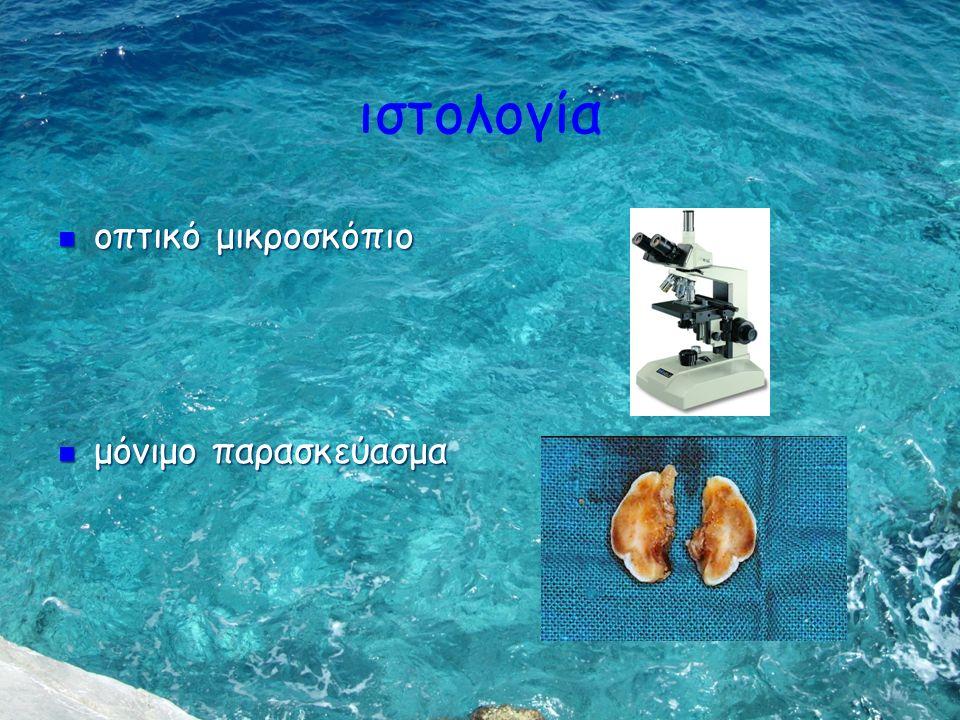ιστολογία οπτικό μικροσκόπιο μόνιμο παρασκεύασμα