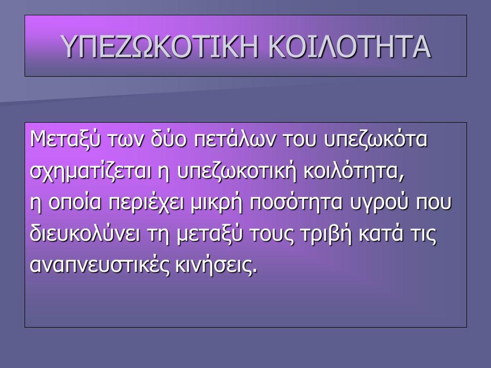 ΥΠΕΖΩΚΟΤΙΚΗ ΚΟΙΛΟΤΗΤΑ