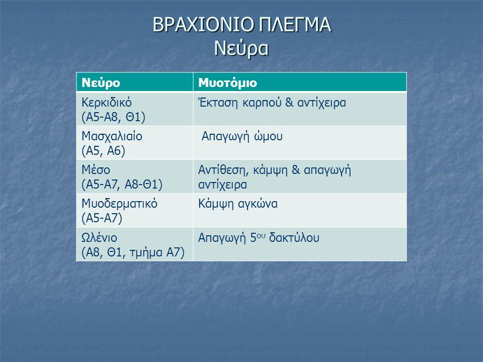 ΒΡΑΧΙΟΝΙΟ ΠΛΕΓΜΑ Νεύρα