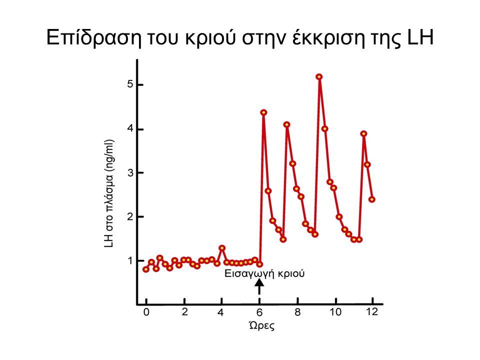 Επίδραση του κριού στην έκκριση της LH