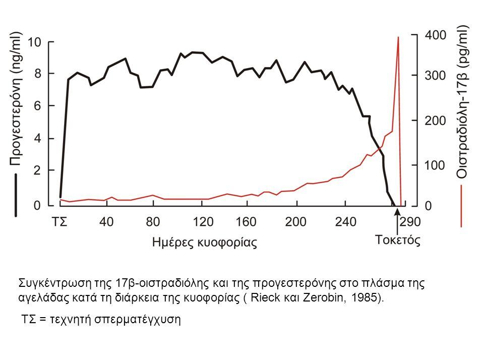 Συγκέντρωση της 17β-οιστραδιόλης και της προγεστερόνης στο πλάσμα της αγελάδας κατά τη διάρκεια της κυοφορίας ( Rieck και Zerobin, 1985).