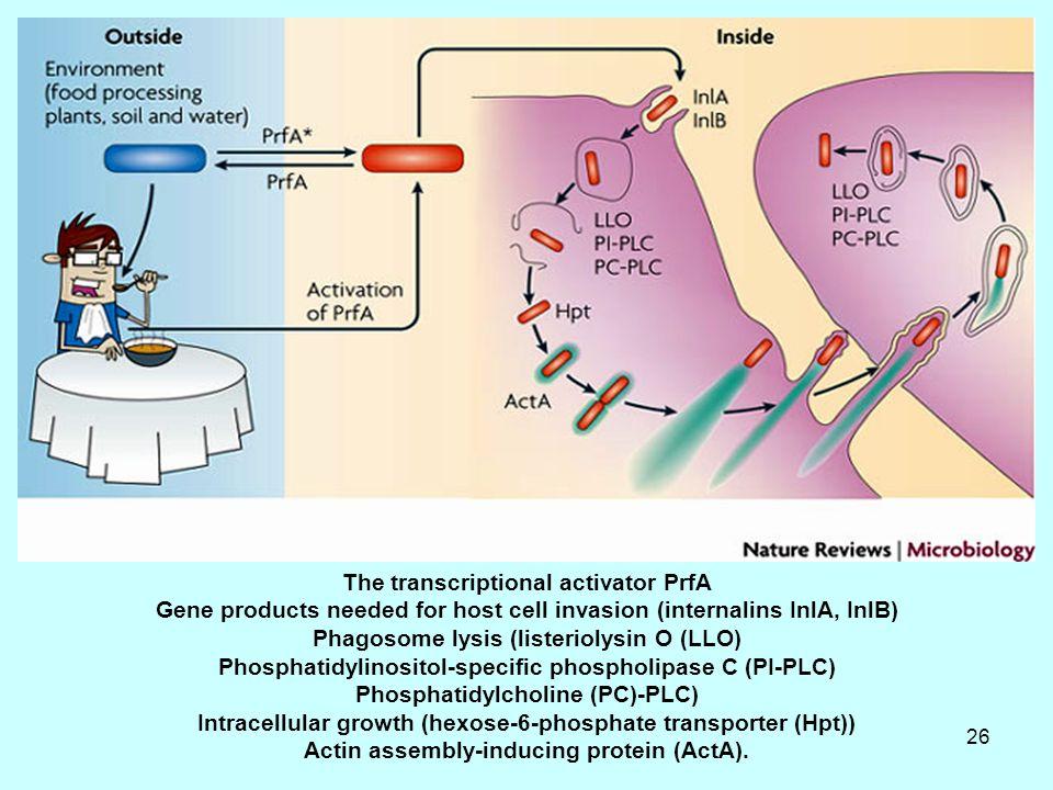Τhe transcriptional activator PrfA