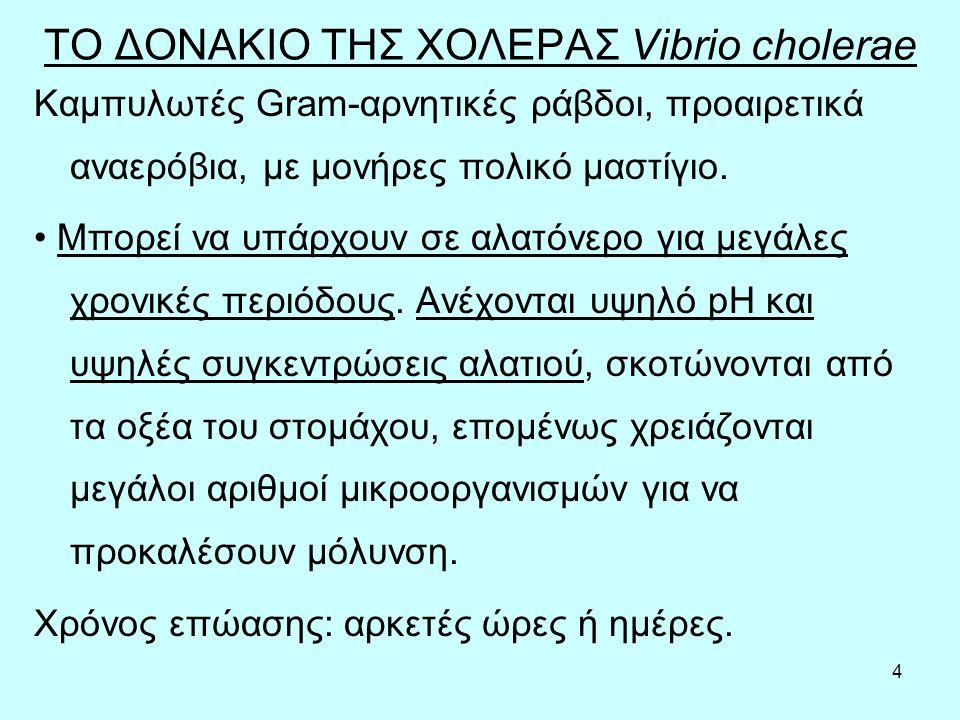 ΤΟ ΔΟΝΑΚΙΟ ΤΗΣ ΧΟΛΕΡΑΣ Vibrio cholerae
