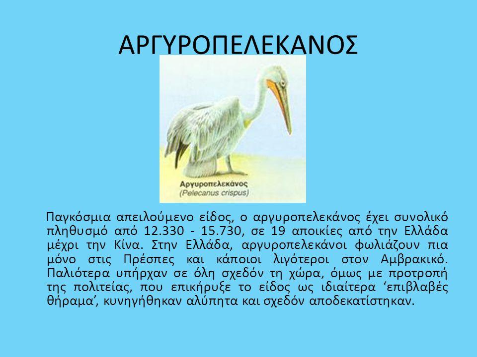 ΑΡΓΥΡΟΠΕΛΕΚΑΝΟΣ