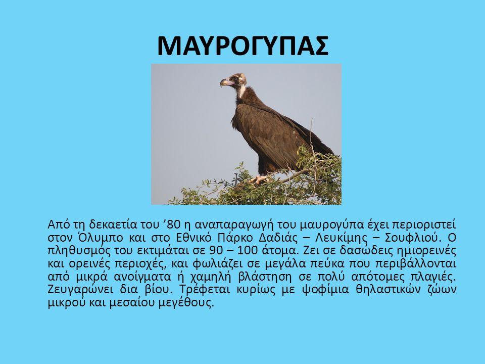 ΜΑΥΡΟΓΥΠΑΣ