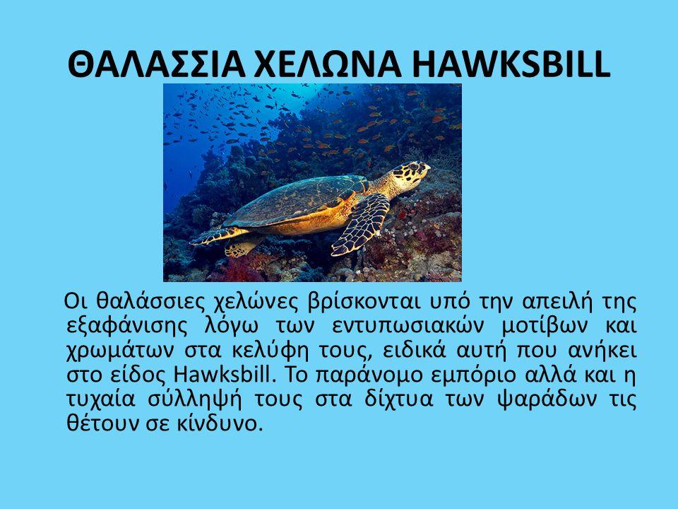 ΘΑΛΑΣΣΙΑ ΧΕΛΩΝΑ HAWKSBILL