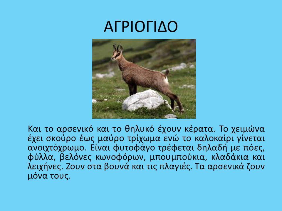 ΑΓΡΙΟΓΙΔΟ