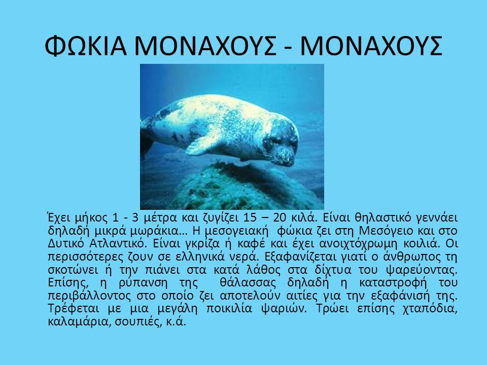 ΦΩΚΙΑ ΜΟΝΑΧΟΥΣ - ΜΟΝΑΧΟΥΣ