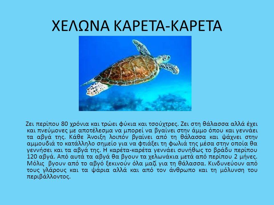 ΧΕΛΩΝΑ ΚΑΡΕΤΑ-ΚΑΡΕΤΑ