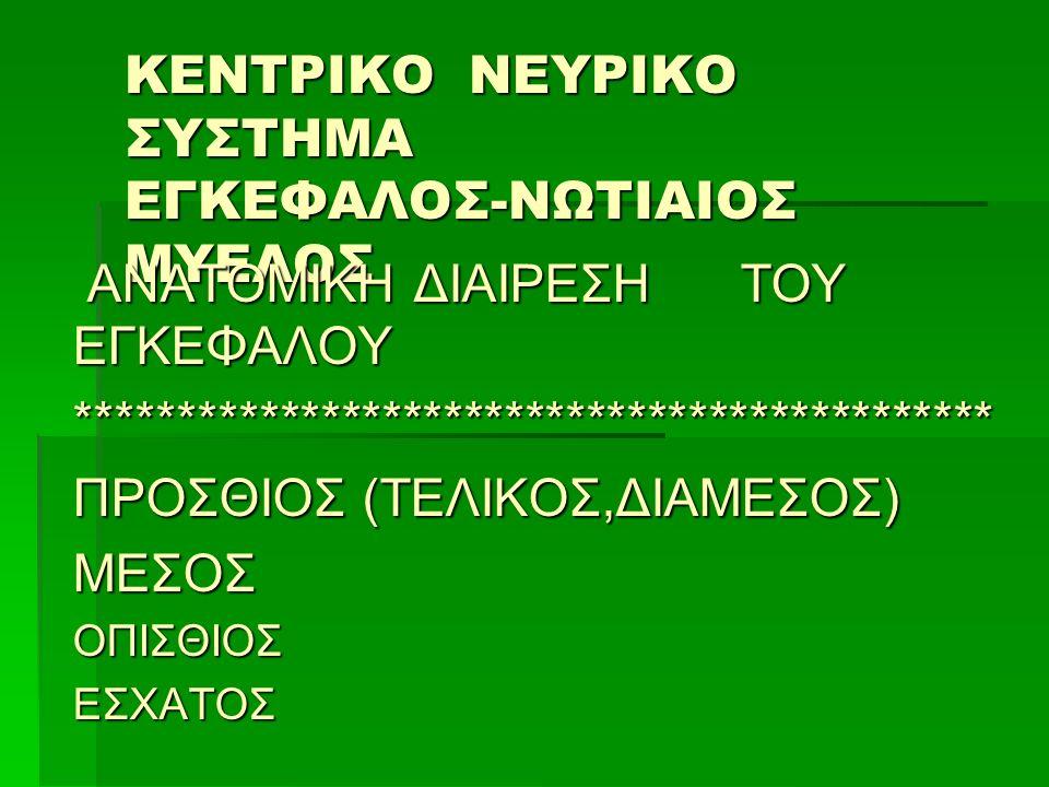 ΚΕΝΤΡΙΚΟ ΝΕΥΡΙΚΟ ΣΥΣΤΗΜΑ ΕΓΚΕΦΑΛΟΣ-ΝΩΤΙΑΙΟΣ ΜΥΕΛΟΣ