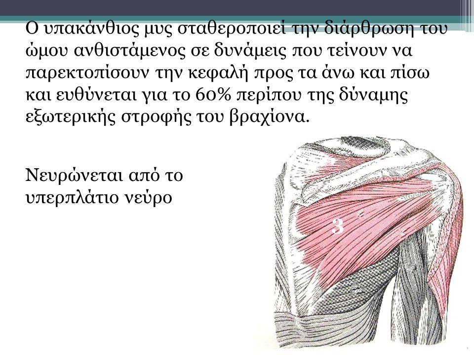 Ο υπακάνθιος μυς σταθεροποιεί την διάρθρωση του ώμου ανθιστάμενος σε δυνάμεις που τείνουν να παρεκτοπίσουν την κεφαλή προς τα άνω και πίσω και ευθύνεται για το 60% περίπου της δύναμης εξωτερικής στροφής του βραχίονα.