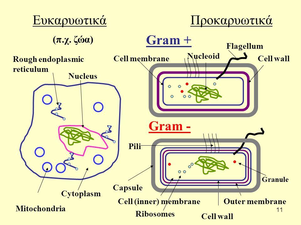 Ευκαρυωτικά Προκαρυωτικά Gram + Gram - (π.χ. ζώα) Flagellum Nucleoid