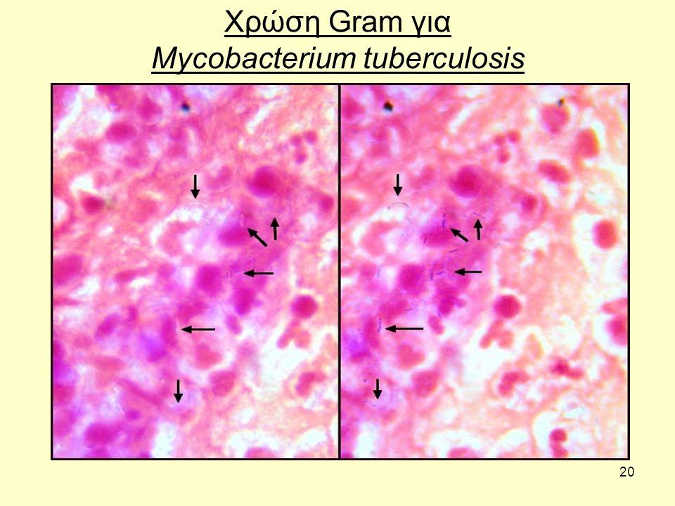 Χρώση Gram για Mycobacterium tuberculosis